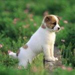 草むらで母親も待ってる子犬