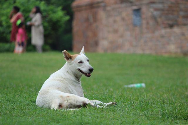 芝生に座っている犬