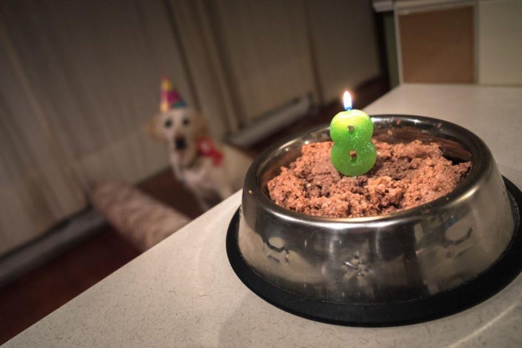 8歳の誕生日とドッグフード