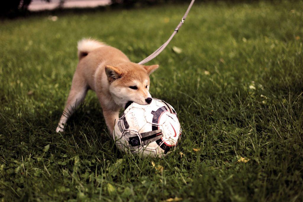 ボールで遊んだあとでおやつを