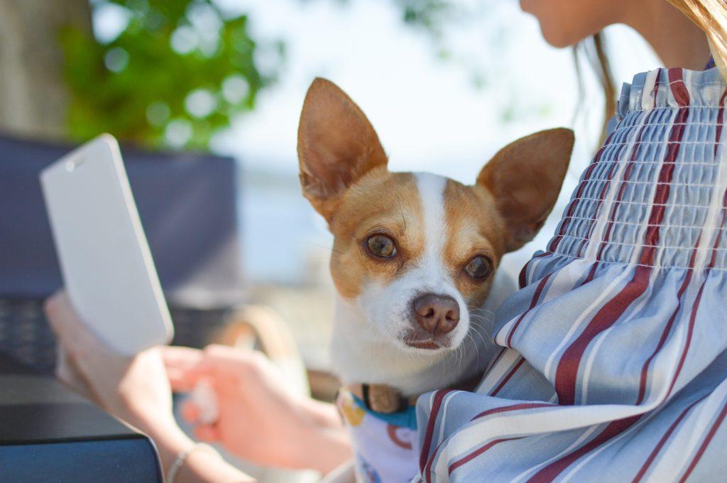 主人の向こうからちらっと見てる犬にもドッグフードを