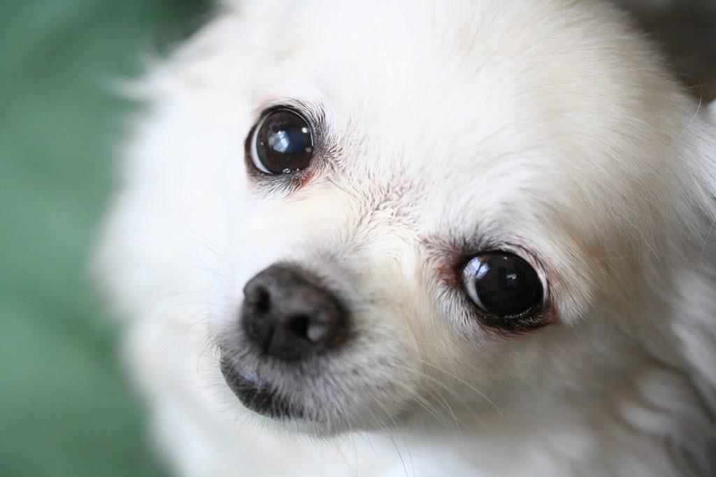 フードを変えると食べなくなった小型犬白
