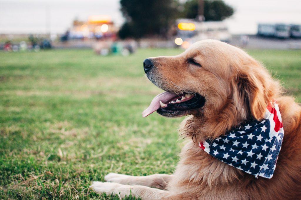 広い芝生に座る犬にドッグフードを