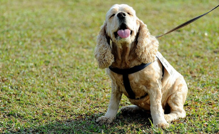 ペット先進国の犬