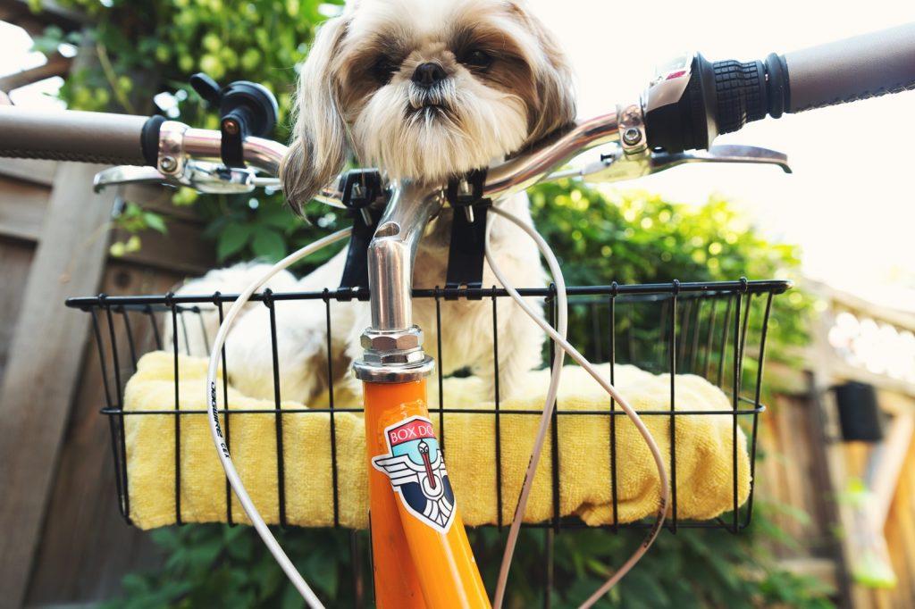 自転車の籠に入った子犬にも手作りドッグフードを