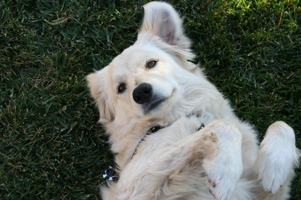 白い犬がスタンド姿勢