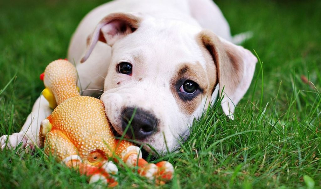 お人形をくわえた犬