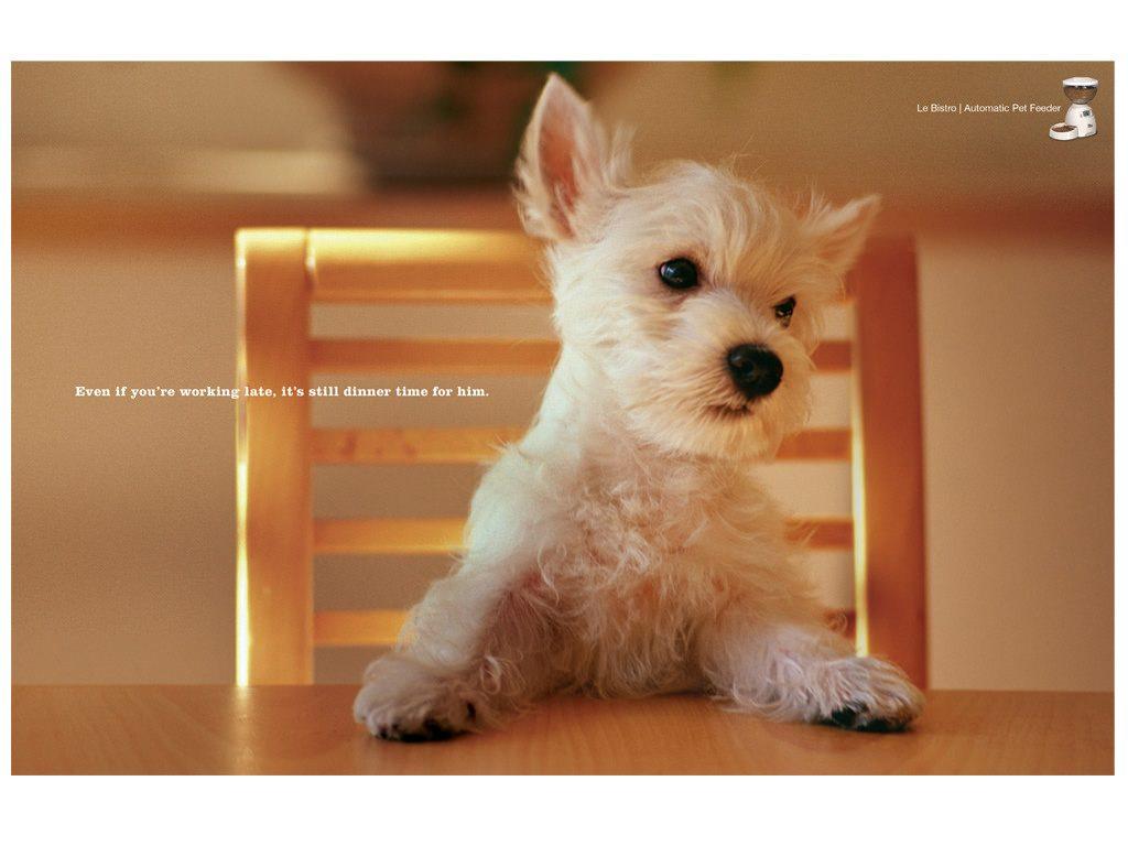 守番はイスに座って待つ犬