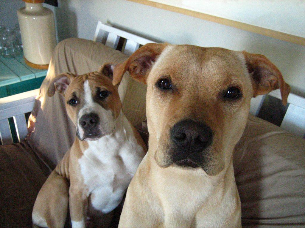 フードを待ってる2匹の犬