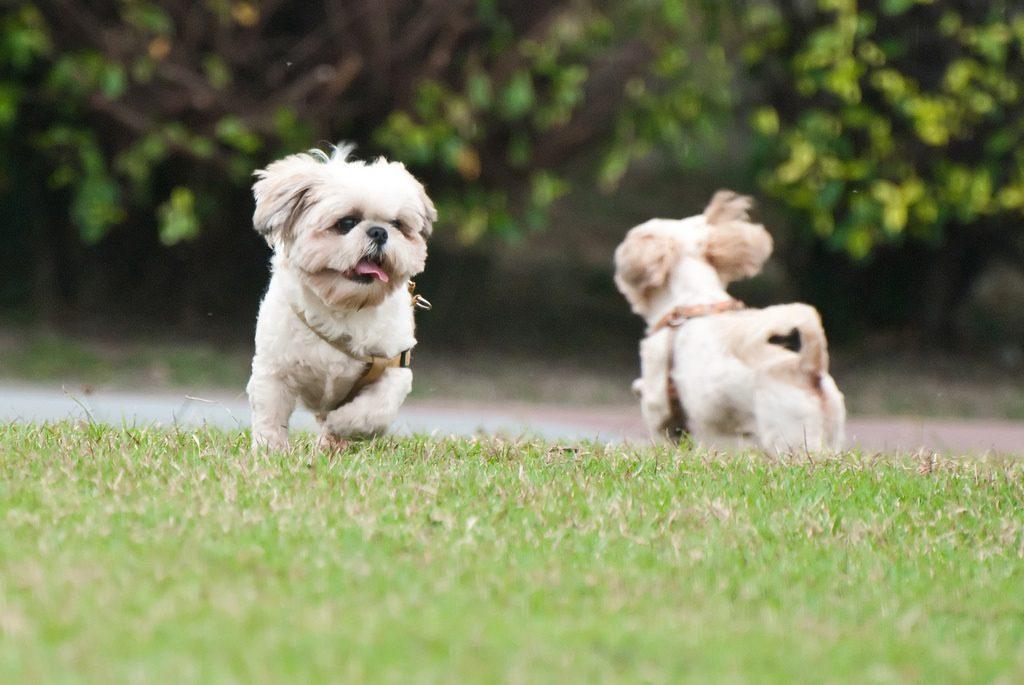 元気に遊ぶ二匹の犬