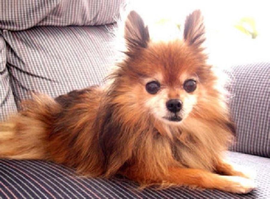 耳をピンと立てる犬