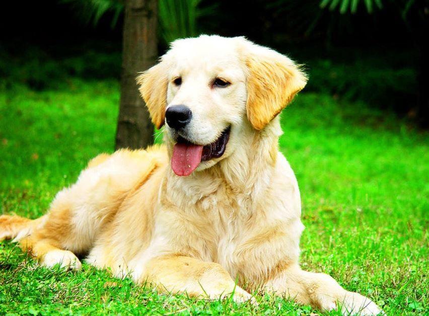 芝生に座っている愛犬