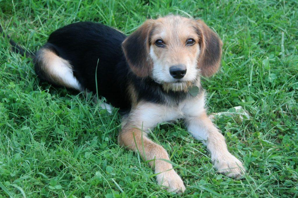 草の上でゆっくりする犬