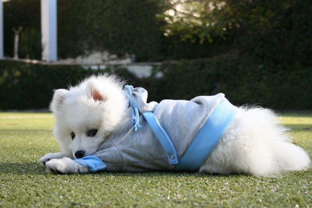 芝生でゆったりの犬