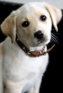 獣医さんの勧めるフードなら安全か?