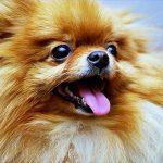 カルシウムの補充が必要な犬