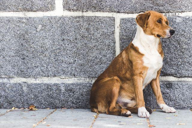 壁際にしっかり待っている犬