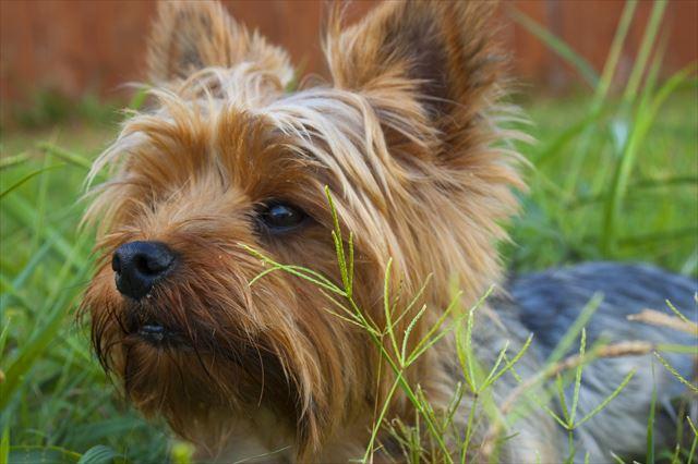 とてもかわいい犬