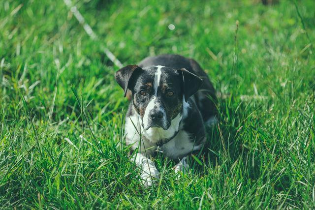 草原を歩く犬