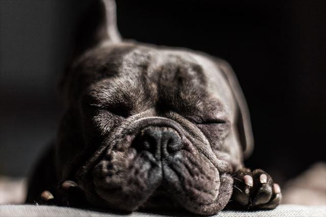 寝ている黒犬