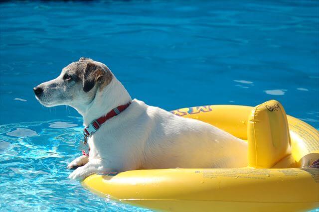 プールに浮かぶジャック