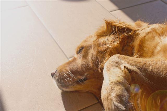 暖かい床で寝ている犬