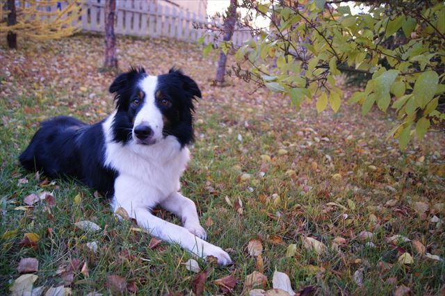 庭に優しく座る犬にドッグフードを