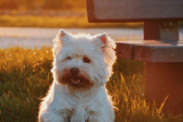 夕日の中で立つ犬