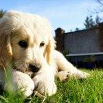 お庭でゆっくりと遊ぶ性格がいい子犬