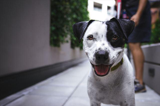 路地裏で楽しそうな犬