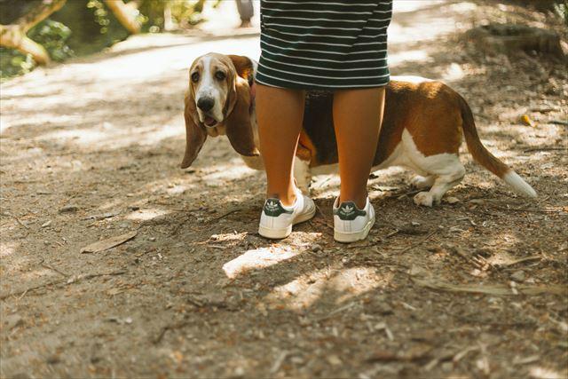 飼い主と一緒の犬