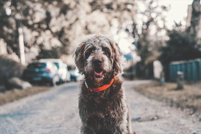 散歩でおすわりしている犬