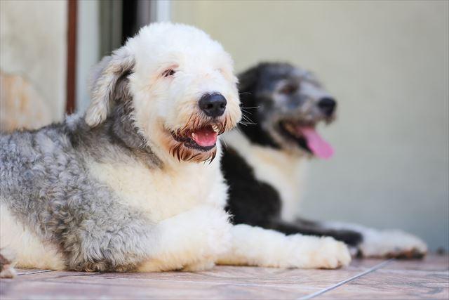 黒と白の2匹の犬