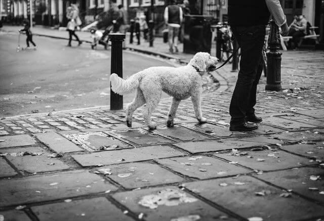 都会で散歩する犬