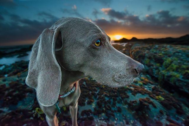 太陽を待つ犬